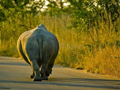 the-end-olifant